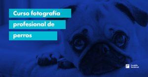 Curso fotografía profesional de perros