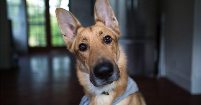 Curso-fotografia-profesional-de-perros-proyecto